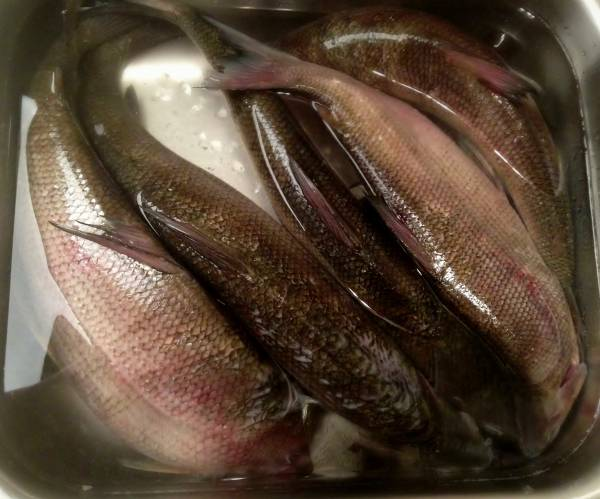 Brines for smoking fish for How to smoke fish in a smoker