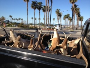 deer hunting in Redondo Beach